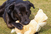 Dog with stuffed animal — Stock Photo