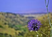 Purpule Flower — Stock Photo