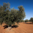 Stock Photo: Olive countryside, Toledo, CastilllMancha, Spain