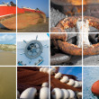 Marine collage — Stock Photo