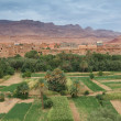 Stock Photo: Oasis of Tinerhir, Morocco