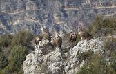 Vultures in las Hoces del Duraton, Segovia, Spain — Stock Photo