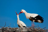 Stork, Vitoria, Alava, Spain — Stock Photo