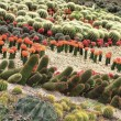 Different cactuses in open space — Stock Photo