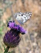 紫色の花に白い蝶 — ストック写真
