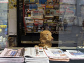 Owner of the newsstand — Stock Photo