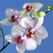 图库照片: Beautiful orchid