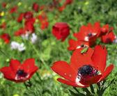 Grasshopper on red flower — Stock Photo