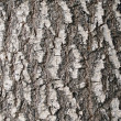 Larch bark texture — Stock Photo