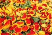 Surprisingly bright and colorful flowers — Stock Photo