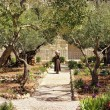 Stock Photo: Keeper of Garden of Gethsemane, Jerusalem