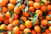 свежесобранные мандарины — Стоковое фото