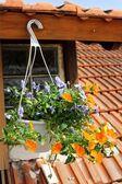 Flowers on the window — Stock Photo