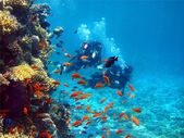 Two divers among fish — Stock Photo