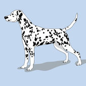 Dalmatian dog illustration — Stock Vector