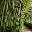 Bambu forest - Stock Photo