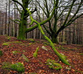 Autum forest — Stock Photo