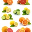 Citrus collection - Stock Photo