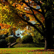 Stock Photo: Boston foliage