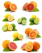 Citrus collection — Stock Photo