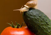 Snail on vegetables — Stock Photo