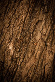 Bark of Oak Tree — Stock Photo