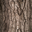 Bark of Oak Tree - Stock Photo