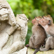 Stock Photo: Long-tailed macaques