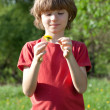 Stock Photo: Boy with dandelion in hands of