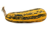 The long ripe zucchini and a little spotted — Stock Photo