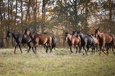 Stado koni — Zdjęcie stockowe