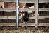 Funny colt pony — Stock Photo