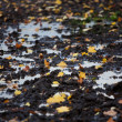 Foto Stock: Autumn leaves in puddle