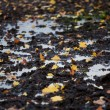 Stockfoto: Autumn leaves in puddle
