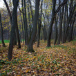 Foto Stock: Autumn landscape