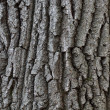 Stock Photo: Bark of tree