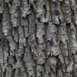 The bark of the tree - Stock Photo