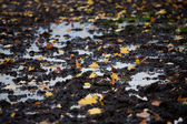 Autumn leaves in a puddle — Stock Photo