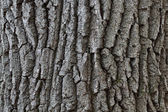 The bark of the tree — Stock Photo