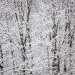 Stock Photo: Snow on tree branches
