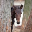 Small foal — Stock Photo