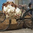 Fowl Bicycle — Stock Photo