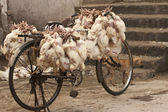 Chickens on a Bicycle — 图库照片