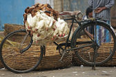 Fowl Bicycle — Stockfoto