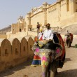Royalty-Free Stock Photo: Decorated Elephant at Amber Fort