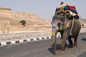 Elephant Taxi at Amber Fort — Stock Photo