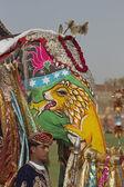 Sloní festival — Stock fotografie