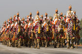 Camel Corps on Parade — Stock Photo