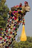 Colorful Camel — Stock Photo