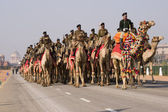 Camel Corps — Stock Photo